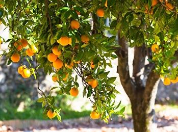 12 ประโยชน์ของส้ม สรรพคุณมากล้น กินส้มวันละผลยิ่งดี !