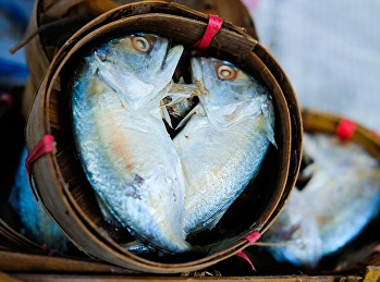 ปลาทู ประโยชน์มากมาย ช่วยลดไขมันร้าย ลดความเสี่ยงโรคหัวใจก็ได้ด้วย
