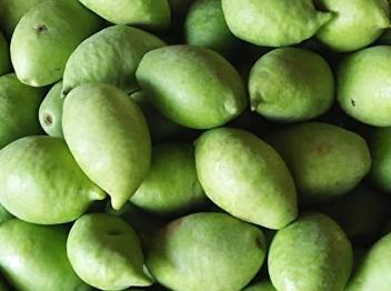 มะกอกน้ำ ประโยชน์และสรรพคุณของมะกอกน้ำ
